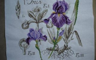 DFEA Etude de Botanique: схема Iris
