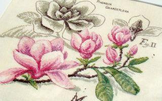 DFEA Etude de Botanique: схема Magnolia