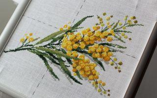 DFEA Etude de Botanique: Mimosa