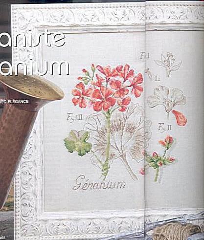 dfea geranium