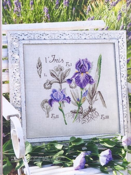 Dfea iris